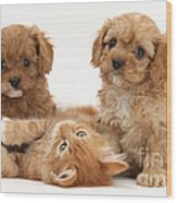 Puppies And Kitten Wood Print