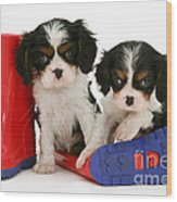 Puppies With Rain Boats Wood Print