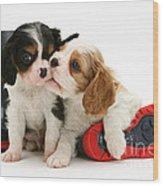 Puppies With Rain Boots Wood Print by Jane Burton