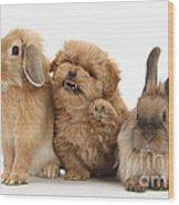 Puppy And Rabbits Wood Print