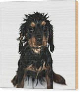 Puppy Bathtime Wood Print