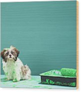 Puppy Covered In Green Paint From Paint Tray Wood Print