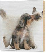 Puppy Licking Kitten Wood Print