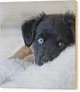 Puppy Lying On Soft Blanket Wood Print by Angela Auclair