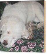 Puppy Nap Wood Print