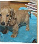 Puppy On Blue Blanket Wood Print