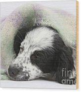 Puppy Sleeping Under Scarf Wood Print