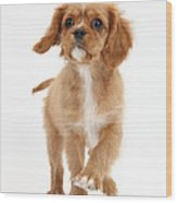 Puppy Trotting Foward Wood Print