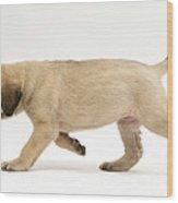 Puppy Trotting Wood Print by Jane Burton