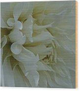 Pure Dahlia Wood Print