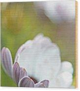 Pure Petals Wood Print