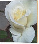Pure White Rose Wood Print