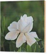 Purity Wood Print