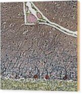 Purkinje Cells, Light Micrograph Wood Print