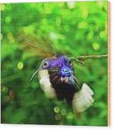 Purple And Blue Hummingbird  Wood Print