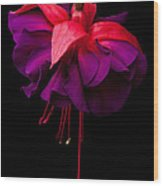 Purple And Pink Beauty Wood Print