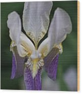 Purple And White Iris 2 Wood Print