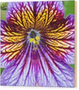 Purple And Yellow Flower Wood Print