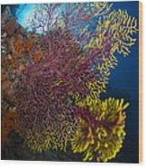 Purple And Yellow Sea Fan In Raja Wood Print