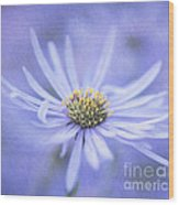 Purple Aster Flower Wood Print