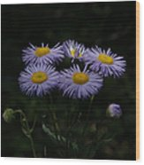 Purple Asters Wood Print