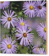 Purple Asters Wood Print