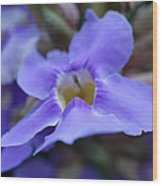 Purple Bokeh Wood Print