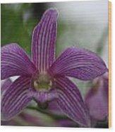Purple Breeze  Wood Print