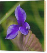 Purple Bromeliad Flower Wood Print