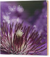 Purple Clematis And Bokeh Wood Print