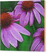 Purple Coneflower Trio Wood Print