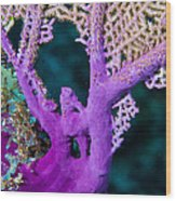 Purple Coral Wood Print