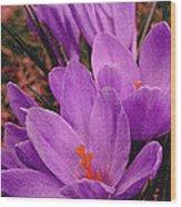 Purple Crocus With A Texture Wood Print