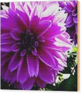 Purple Dahlia Wood Print