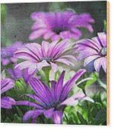 Purple Daisies  Wood Print