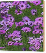Purple Daisies Square Wood Print