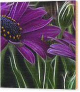 Purple Daisy Wood Print
