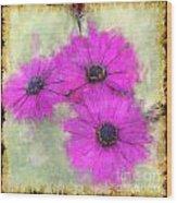 Purple Daisy Trio II Wood Print