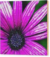 Purple Dew Wood Print
