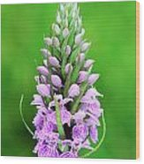 Purple Early Morning Orchid Wood Print