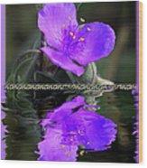 Purple Elegance - Spider Wort Wood Print