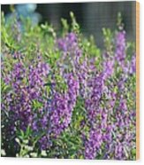 Purple English Garden  Wood Print