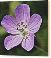 Purple Flower 1 Wood Print