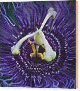 Purple Flower 3 Wood Print