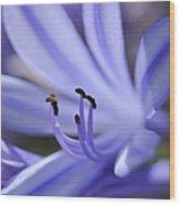 Purple Flower Close-up Wood Print