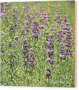 Purple Flower Field Wood Print