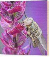 Purple Flower Fly Wood Print
