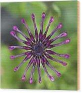 Purple Flower In Bloom Wood Print