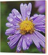 Purple Flower Morning Dew Wood Print