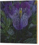 Purple Flower Springs Wood Print